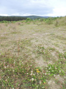 Open vegetation on cleared land, Hill of Banchory