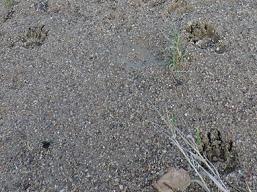 Maidencraig badger monitoring