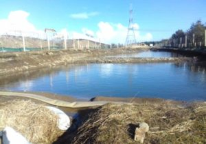 SuDS pond system at Thurso South