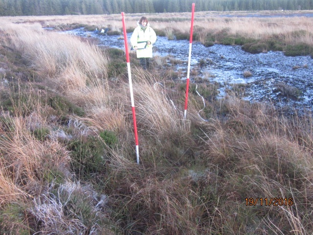 pre construction surveys vegetation survey northern ecological services 7335