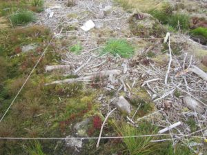 Permanent monitoring plot in deforested bog habitat